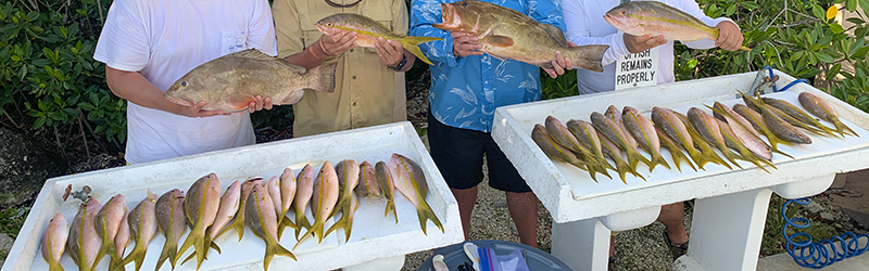 Yellowtail snapper grouper